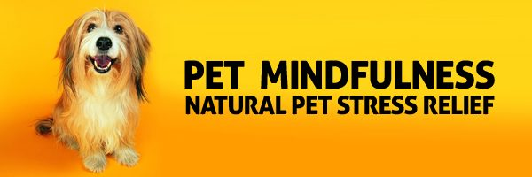 Pet Mindfulness and Animal Therapy