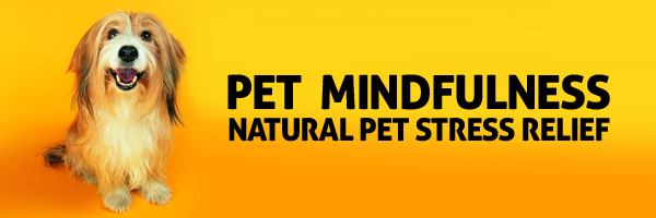 Pet Mindfulness Therapy