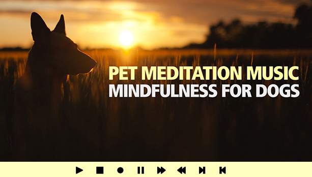 Pet Meditation Music