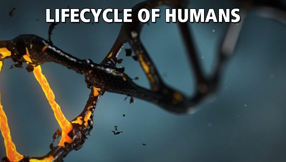 Exploring The Human Lifecycle and Common Causes of Death