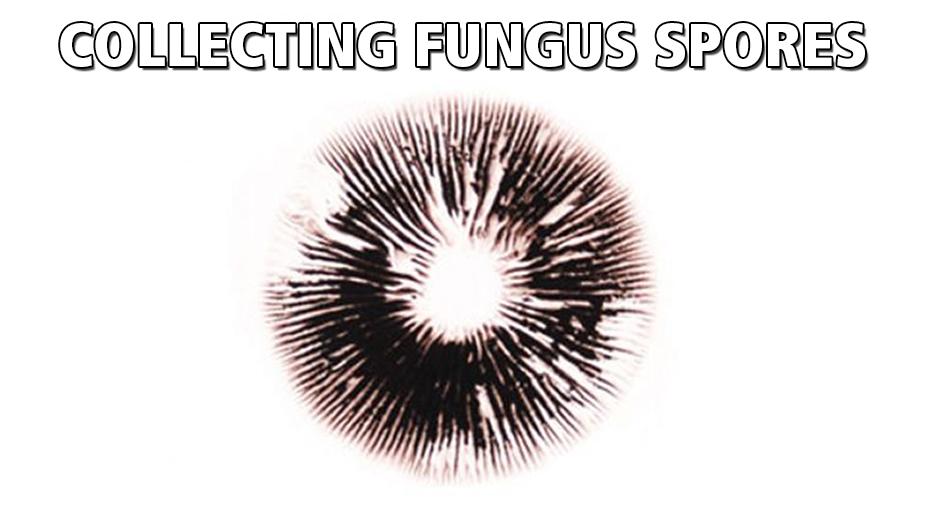 making a spore print while growing magic mushrooms