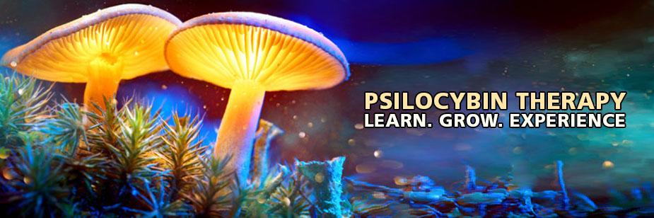 psilocybin therapy growing magic mushrooms hallucinogenic fungi mind-altering substance