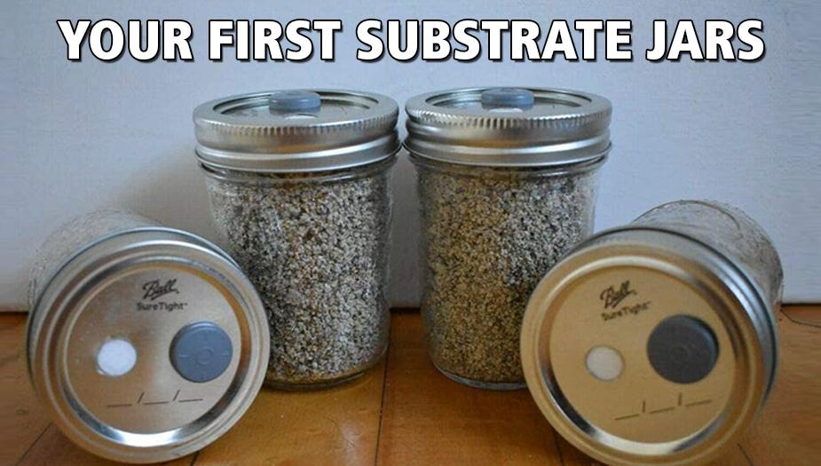 creating subsctrate jar for growing magic mushrooms